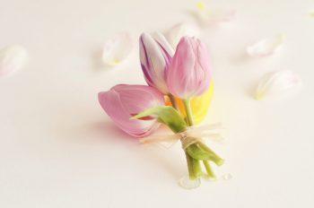 Bouquet de tulipes, image haute résolution libre de droit à télécharger pour identité visuelle, communication et décoration. Fleurs Pâques Naissance