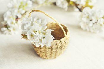 Fleurs de cerisier, image haute résolution libre de droit à télécharger pour identité visuelle, communication et décoration. Printemps Pâques Mariage Blanc