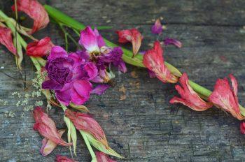Photo fleurs séchées décoration été jardin