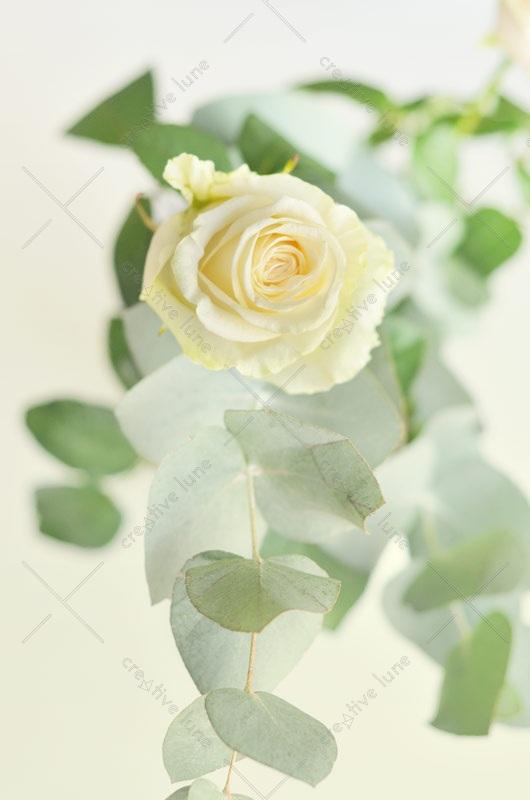 Photo Fleurs Vert Jaune Branches