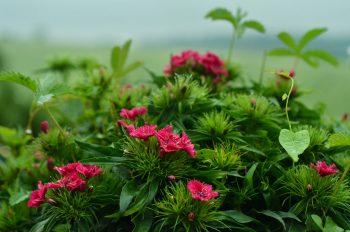Fleurs dans la rosée, photographie haute résolution libre de droits à télécharger pour identité visuelle, communication et décoration. Jardin Plantes Matin