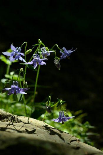 Photo Fleurs Sauvage Nature Sous bois