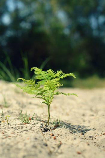Fougère dans le sable, photographie haute résolution libre de droits à télécharger pour identité visuelle, communication et décoration. Plante Mer Nature