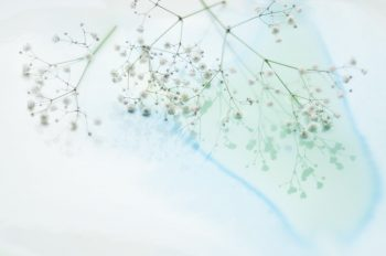 Fleurs de Gypsophile, lot de 3 images haute résolution libres de droits à télécharger • Floral, Bouquet, Mariage, Fête, Douceur, Blanc, Photo, Décoration