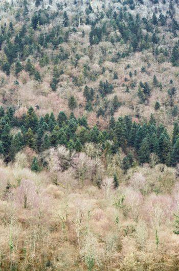 Forêt de bouleaux et de sapins en hiver, image haute résolution libre de droits à télécharger pour identité visuelle, communication et décoration. Arbres Nature Montagne Sauvage Noël Hiver Blanc Froid Paysage Naturel