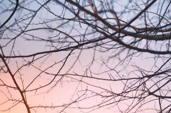 Fines branches et soleil couchant, photographies haute résolution libres de droits à télécharger pour identité visuelle, communication et décoration. Arbre Nature Végétal Plantes Lumière Rayons Couleurs Hiver Froid Jardin Campagne