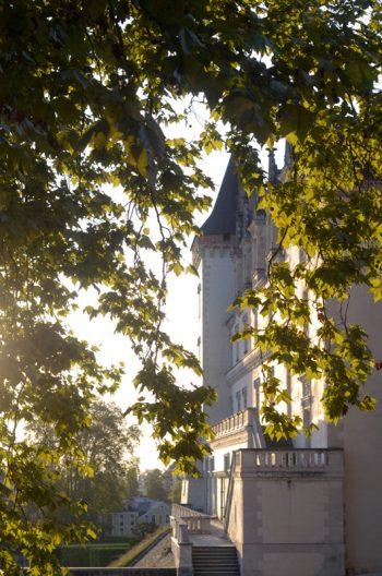 Château béarnais depuis la ramure d'un platane • Image de Pau libre de droit à télécharger