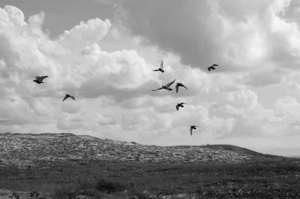 Paysage maritime : vol d'oiseaux au dessus de la dune • Image haute résolution libre de droit à télécharger