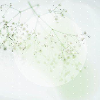 Gypsophile d'hiver, carte florale • Noel • Téléchargeable & Imprimable