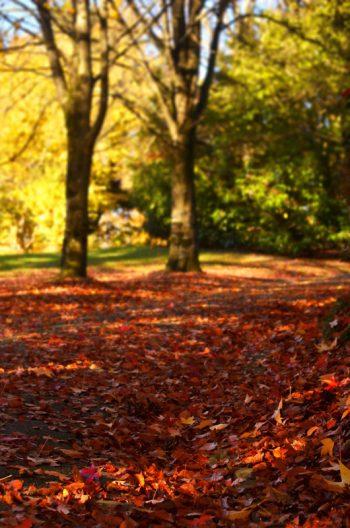 Paysage automnal : arbres et feuilles colorées • Photo automne • Libre de droit