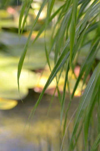 Plan d'eau végétalisé et ensoleillé • Image haute résolution libre de droits à télécharger