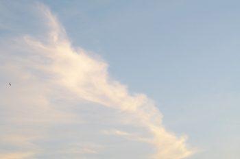 Vol d'Hirondelle sur un ciel dégagé • Image haute résolution libre de droits à télécharger