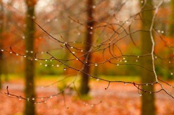 Sous-bois en automne après la pluie • Photo de paysage • Libre de droit