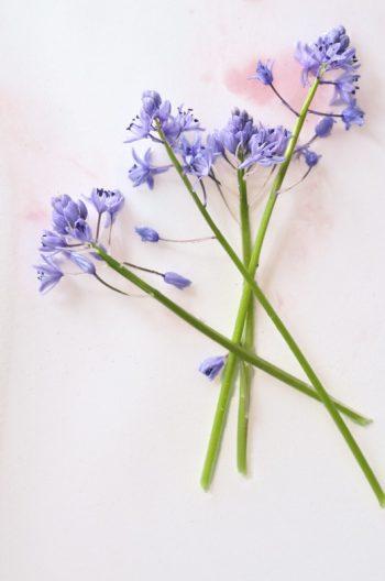 Décoration printanière : Jacinthe des bois • Photo de fleurs de Jacinthe à télécharger / Image de Nature libre de droit à imprimer - Creative Lune