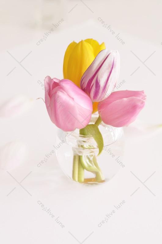 Tulipes de printemps dans un vase • Photo de Fleurs Libre de droits à Télécharger / Image hd de Tulipes au Printemps, Décoration florale - Creative Lune