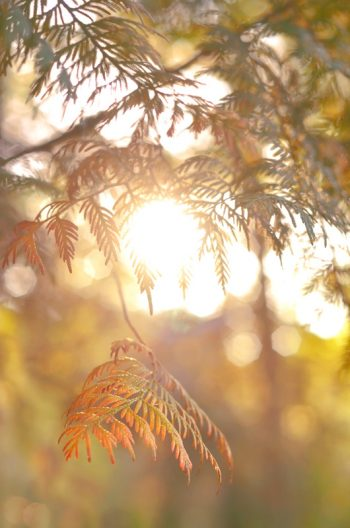 Forest in autumn and conifer - Downloadable & Royalty free photo of trees in autumn • Creative Lune
