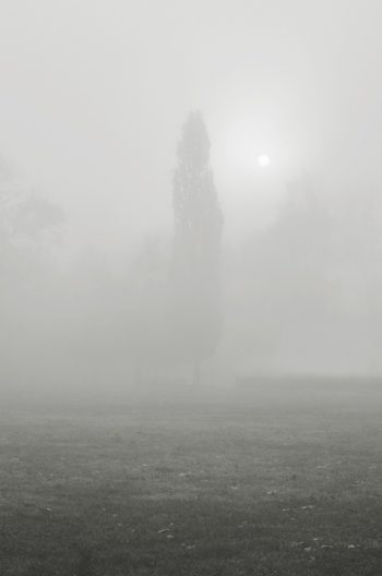 Tree in the fog - royalty free picture • Autumn landscape • Creative Lune