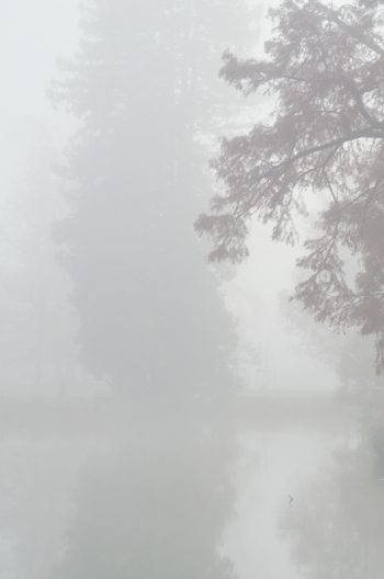 Winter landscape and fog on the water - downloadable & royalty free photo of winter • Creative Lune