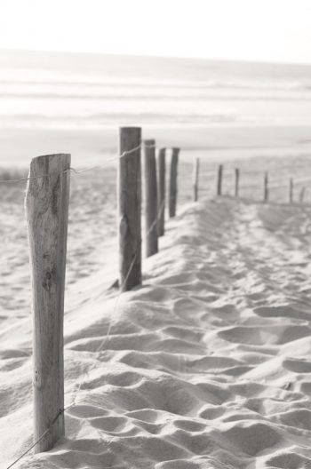 Wood stakes in the sand - royalty free picture of a seaside landscape / Photo of a wood fence in the sand and an oceanic view • Creative Lune