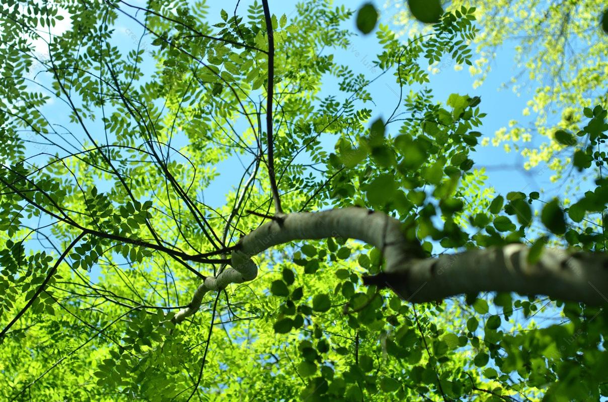 Arbre de printemps photographie haute résolution libre de droits à télécharger pour identité visuelle, communication et décoration. Soleil Sauvage Nature