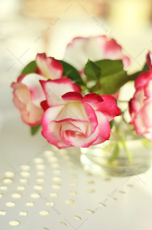 Photo fleurs roses bouquet printemps