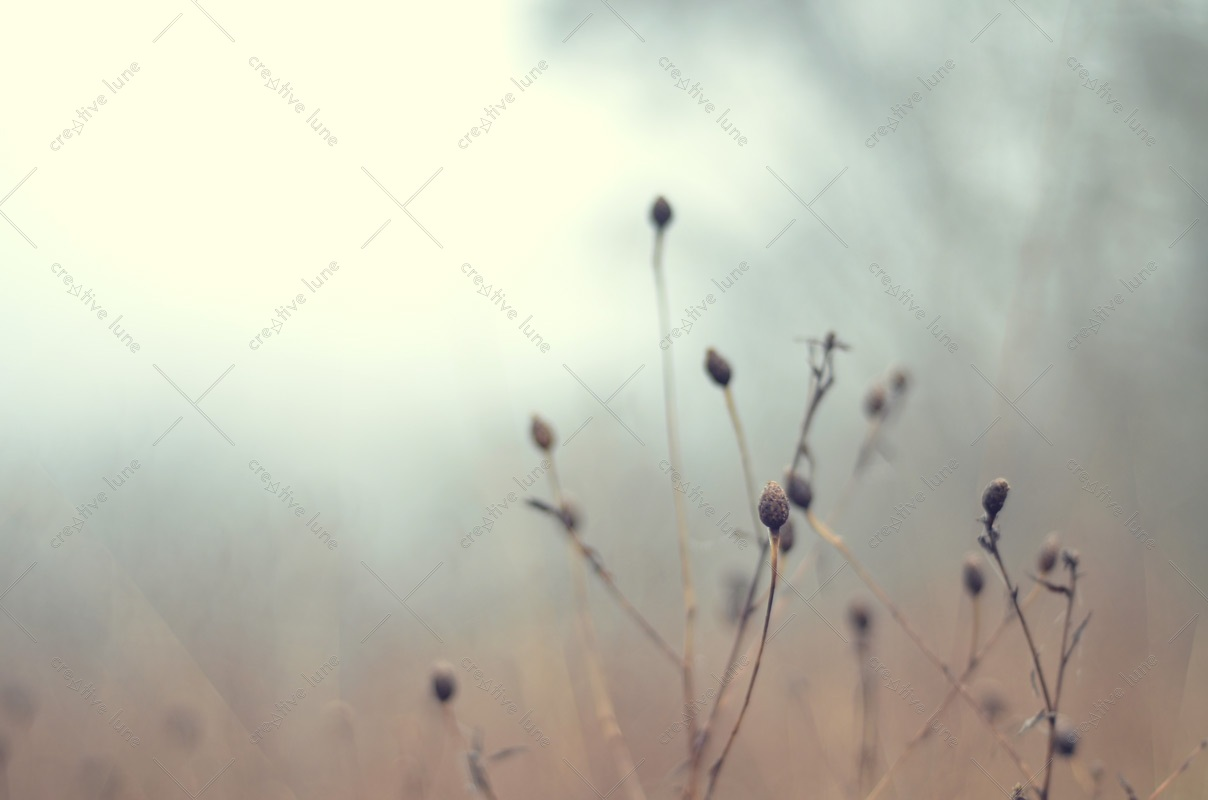 Brouillard en hiver, photographie haute résolution libre de droit à télécharger pour identité visuelle, communication et décoration. Nature Herbes Brume