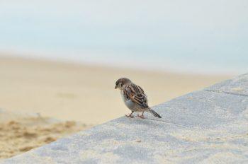 Oiseau au bord de l'océan, image haute résolution libre de droits à télécharger pour identité visuelle, communication et décoration. Animal Moineau Mer
