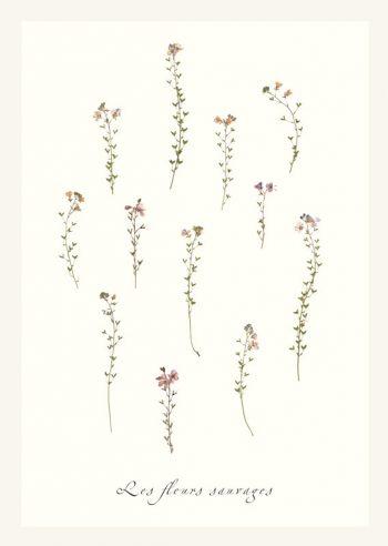 Affiche Végétal Plantes Illustrations Botanique