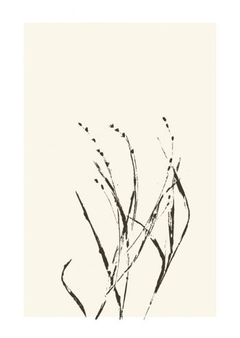 Affiche Herbes Sauvage Nature Plantes Design