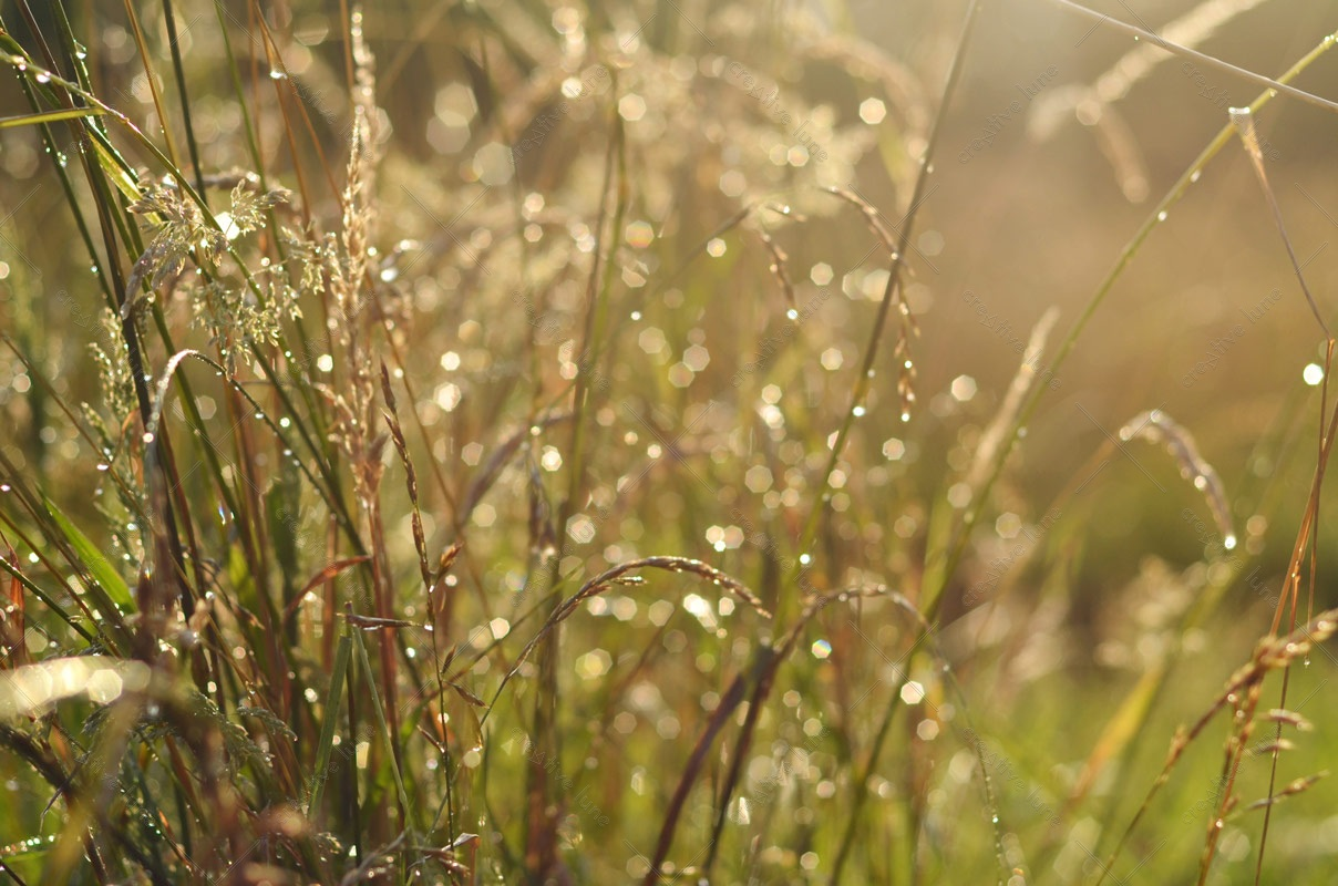 Prairie sous la pluie, photographie haute résolution libre de droits à télécharger pour identité visuelle, communication et décoration. Nature Campagne