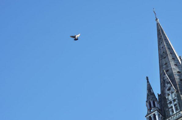 Pigeon et clocher, photographie haute résolution libre de droits à télécharger pour identité visuelle, communication et décoration. Ville Eglise Ancienne