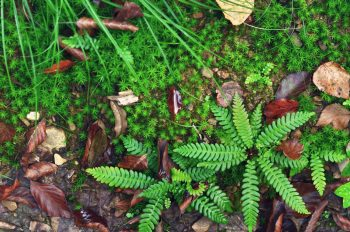 Petit jardin forestier, image haute résolution libre de droits à télécharger pour identité visuelle, communication et décoration. Hiver Sauvage Nature Forêt