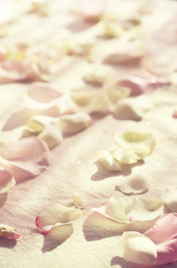 Pétales de rose, photographie haute résolution libre de droit à télécharger pour identité visuelle, communication et décoration. Fleurs Table Fêtes Noel