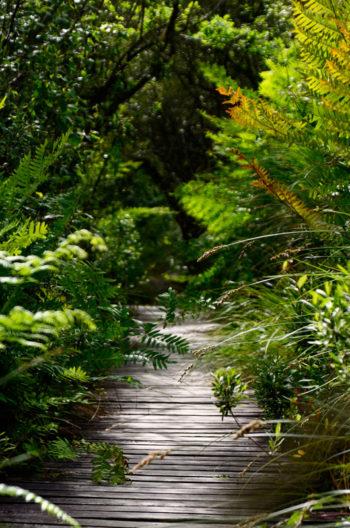 Passerelle en bois dans une forêt luxuriante, image haute résolution libre de droits à télécharger • Nature, Végétaux, Printemps, Fougères, Plantes