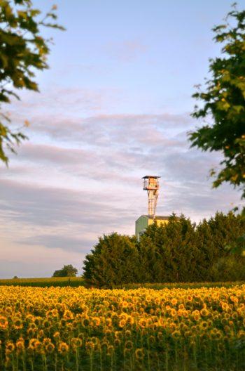 Campagne et culture estivale : champ de tournesols • Image haute résolution libre de droits à télécharger / Agriculture, France, Fleurs, Nature, Agricole