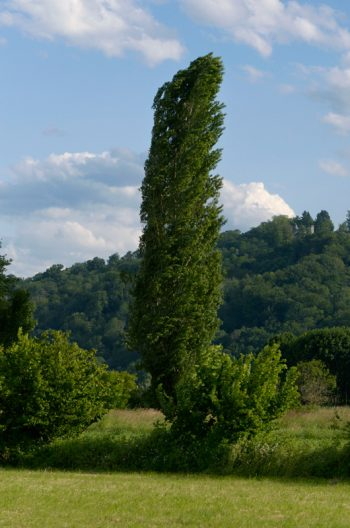 Nature et paysage arboré : Peuplier • Image haute résolution libre de droits à télécharger • Creative Lune