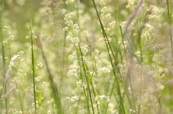 Prairie sauvage en fleurs • Image haute résolution libre de droits à télécharger • Creative Lune