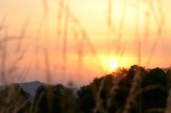 Nature sauvage au soleil couchant • Photo de paysage • Libre de droit
