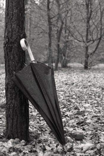 Décor automnal : parapluie et forêt • Photo en noir et blanc • Libre de droit