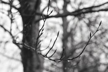 Hiver, forêt et rameau de Hêtre • Image arbre - libre de droit à télécharger