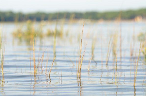 Paysage maritime et plantes aquatiques • Image mer et nature libre de droit à télécharger