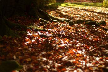 Tapis de feuilles mortes en automne • Photo de nature • Libre de droit