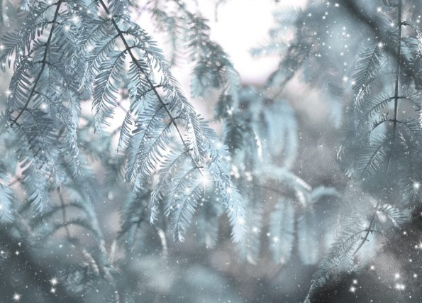 Forêt féerique : carte de Noël à Télécharger & à Imprimer