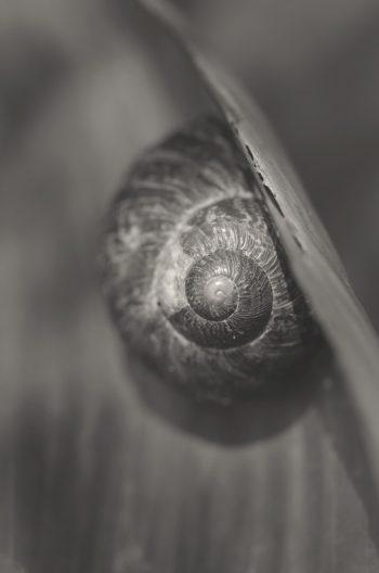 Escargot caché sous une feuille • Photo Nature noir et blanc libre de droits / Image HD d'un escargot à Télécharger, Photographie macro animaux & mollusques