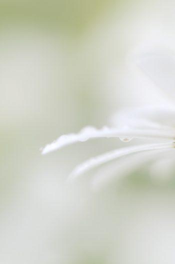 Fleur de marguerite dans la brume • Photo Printemps Libre de droit à télécharger / Image macro de fleur de marguerite - Creative Lune : Banque d'images