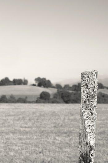 Paysage champêtre et piquet de bois • Photographie noir et blanc libre de droits à télécharger