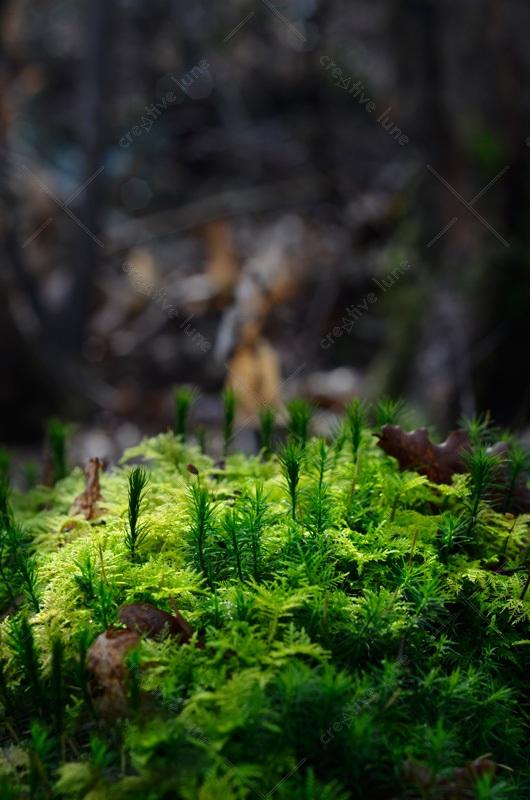 Mousse en sous-bois - photographie de nature libre de droits à télécharger • Creative Lune