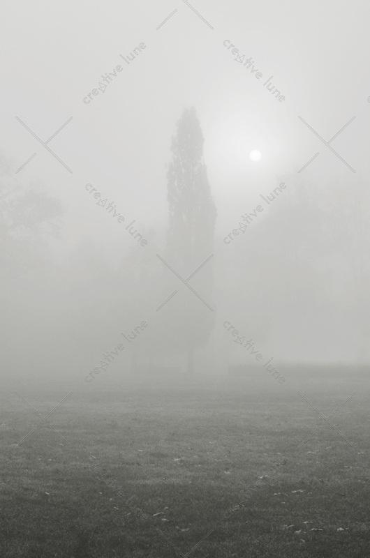 Arbre dans le brouillard - photo de paysage noir et blanc • Creative Lune