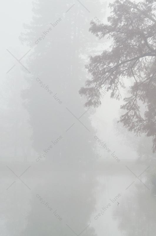 Paysage hivernal et brouillard sur l'eau - photo libre de droits à télécharger • Creative Lune