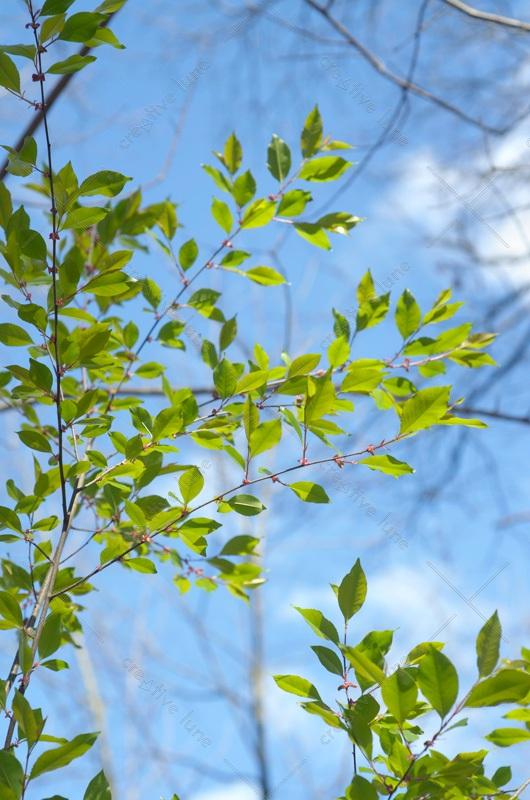 Forêt au printemps et feuillage délicat - photo Nature • Creative Lune